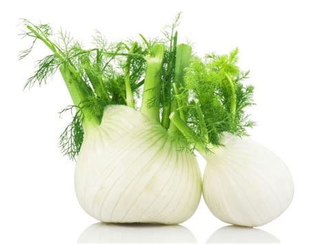 fennel picture 9