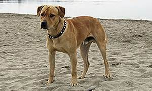 Canine prostate problems in neutered male picture 7
