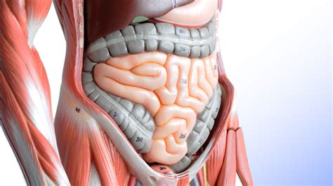 What are symptoms of colon cancer picture 13