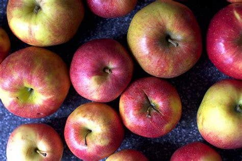 applesauce recipe diet picture 6