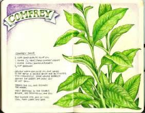 herbal medicine journal picture 1