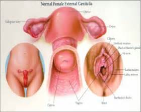 information on yeast infections of the vulva picture 2
