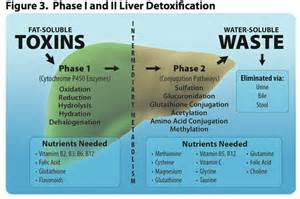 liver cleanse and weight loss picture 2