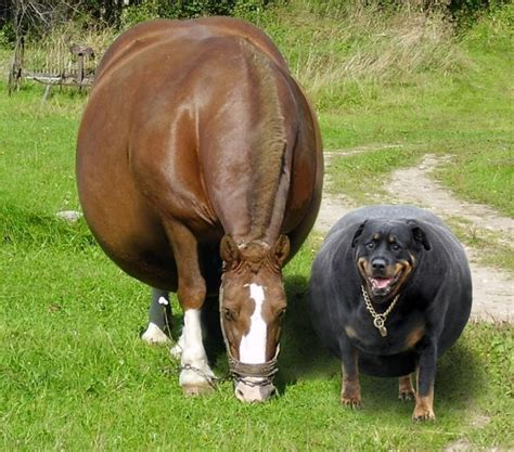 fat and horsing picture 13