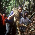 tongkat ali herpes picture 11