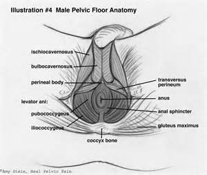 can a mans penis feel a womens pelvic bone when having picture 4