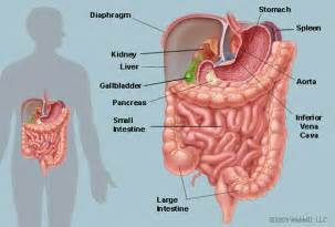 cyst on kidney liver stomach pancreas picture 19