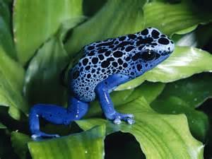 amphibian skin spots picture 7