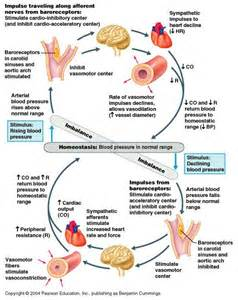 foods greater blood flow picture 5