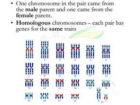 how many sex chromosomes does a human male picture 2