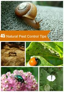 biological pest control herbal picture 2