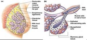 cell skin reproduction picture 9