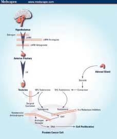 testosterone measurement in patients with prostate cancer picture 9