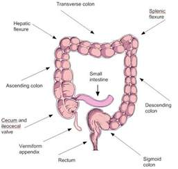 colon pictures picture 15