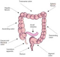 colon and picture 6
