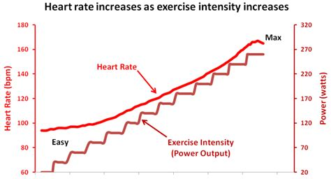 as you exercise the heart rate increases supplying picture 2