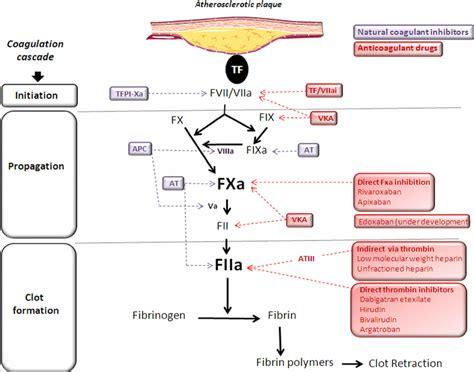 cholesterol anticoagulant picture 9