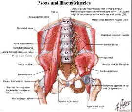 iliopsoas muscle picture 9