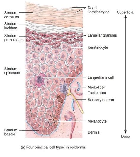 what are liver spots picture 6
