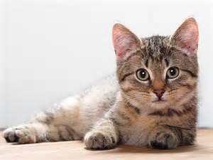 feline h picture 5