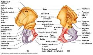 female anatomy pics picture 2