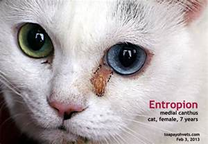 feline skin irritation picture 17
