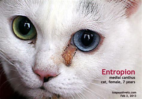 feline skin disorders picture 13
