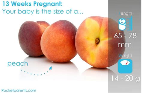13 week pregnancy in hindi picture 7