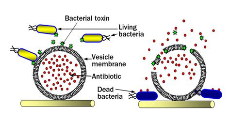 do bacterial infections heal on their own picture 11