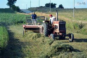 alfalfa hay for sale picture 5