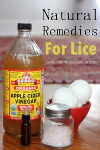 herbal treatments for lice picture 1