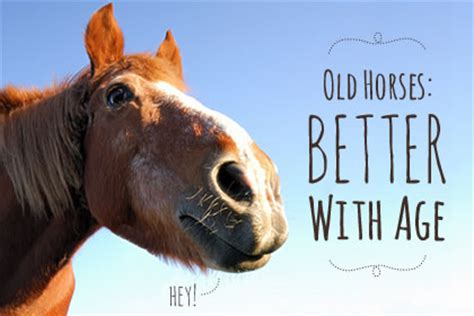 aging horses picture 9
