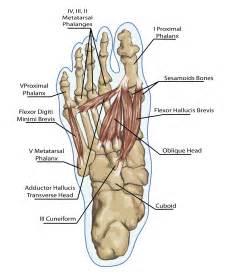bladder peroneum picture 1