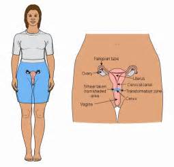 cancer of the body of the uterus during picture 9