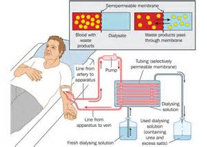 how does gynaecosid works in the treatment of picture 7