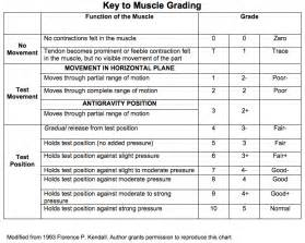 muscle strength test picture 11