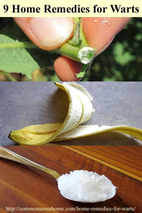 chinese herb get rid of flat warts picture 11