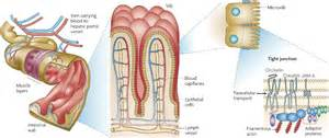 intestinal bacterial infection picture 1