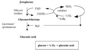 microbial production of citric acid picture 7