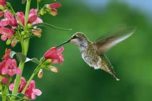 hummingbird diet picture 18