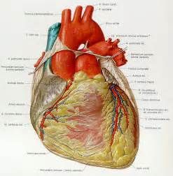 anatomy picture 3