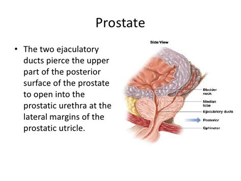 Google prostate picture 11