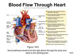 blood flow song picture 3