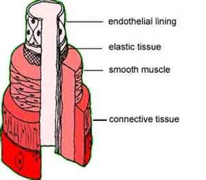 hardening of the heart muscle picture 2