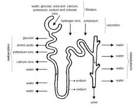 bladder flow picture 18