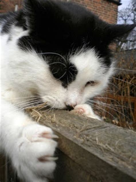 why cats loose their appees picture 6