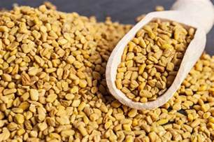fenugreek seed picture 11