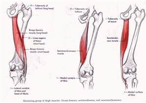 hamstring muscle injuries picture 6