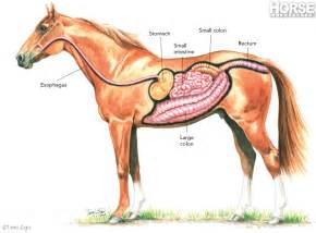 digestion tract picture 5