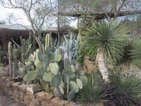 hoodia gordonii cactus picture 9